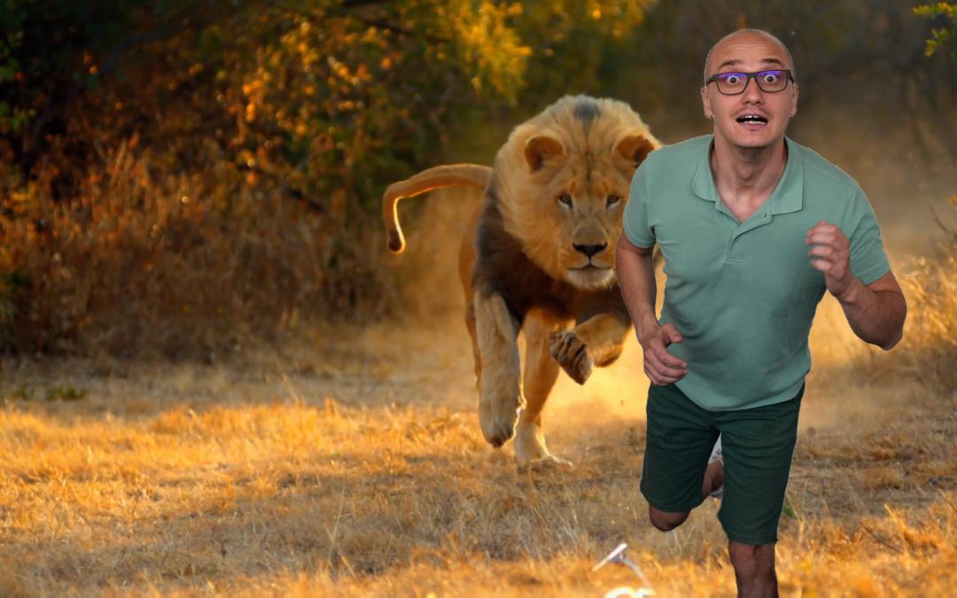 Toma fugarit de leu